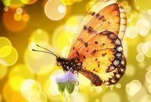 -butterflies- / by Brigette Rau-Edgell