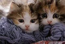Kittens and Mittens / Kutschbach Kids