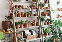 GARTEN LIEBE // Tricks, Tipps, Schönes / Gartenliebe, Pflanzen, Ideen für den Garten, Tipps und Tricks