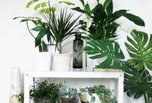 PFLANZEN LIEBE // / Grün ist die schönste Farbe der Welt. Pflanzen sind zauberhaft.. Schönes für drin und draussen.