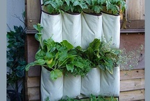 Gardening  Ideas / by Terri Wood