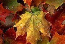 Autumn / by Julie Weimer