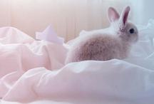 Bunny love / by Renée Bugg