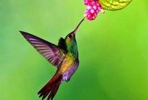 ❤ Hummingbirds ❤