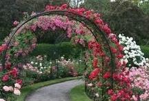 ☀ Garden Ideas ☀