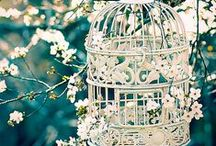 Garden Wedding - Christal