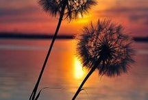 Sunrise / Sunset  /  Moon