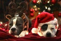 Christmas - Pit Bull Style