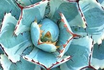 Flowers | Flors | Fleurs / by Lafarguita