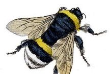 """Bees*Bumbles*Wasps / """"In that day the LORD will whistle for the fly that is in the remotest part of the rivers of Egypt and for the bee that is in the land of Assyria.""""  Isaiah 7:18 / by Robin Arnold"""