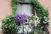rooftop garden / balcony garden / by Marsha Rainey