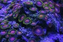Purple, Lavender, Violet