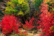 Autumn / The amazing colors of fall / by Judy Gacek