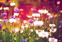 flowers / by Kaitlyn Elizabeth