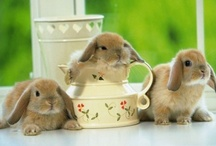 Animals - Bunnies / by Vanessa Sherwood