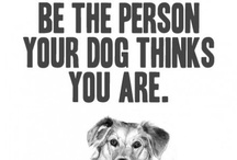 Dog Quotes / Funny or serious, this is going to be the biggest board with Dog quotes :)