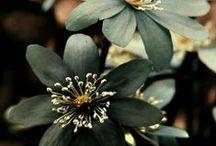 Jardin secret / fleurs, paysages, arrangements, vases, arbres...