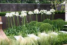 Kauniit kasviyhdistelmät - beautiful plant combinations / Colors, shapes