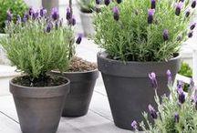 Ruukut ja istutusastiat - containers in garden / Erilaisia ruukkuja ja ruukkuistutuksia