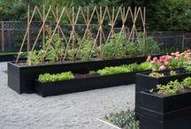 Hyötypuutarha - Kitchen garden, potager