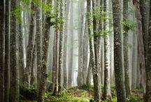 Luonnonkaunista -  Nature near you