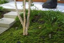 Sammalpuutarha - moss garden