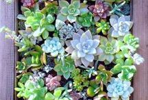 Succulents Only / One of our favorite apartment-friendly plants is the succulent. They're easy to care for and do well in smaller spaces. Get ideas for incorporating these water-wise plants into your home decor and patio gardens.