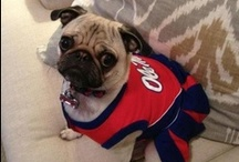 My Pet Digs Ole Miss / Even pets love the Ole Miss Rebels! Send photos of your pets sporting Ole Miss gear to getsocial@olemiss.edu.