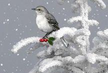Christmas Illustrations / by Kathi Jingling