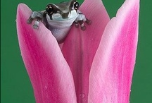 frogs...lizards... / by Theresa Fulgoni-Chittock