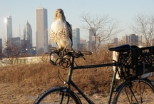 Wildlife in our Parks / by Chicago Park District