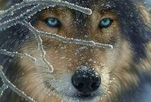 Wolves / wolves, not the human kind / by Deanna Patterson