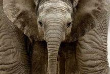 Elephants / Elephants / by Deanna Patterson