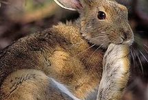 Rabbits / Rabbits / by Deanna Patterson