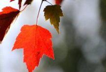 Autumn-H'ween-Thanksgiving