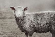 FARM~sheep & goats / by Phoebe