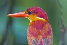 I'm A Bird Watcher!