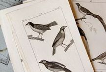 BIRDS / Illustrations, art and photos of birds, nests, and feathers.