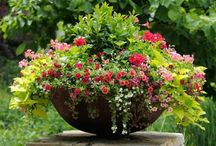 Grow me a container / Container gardens for sun and shade