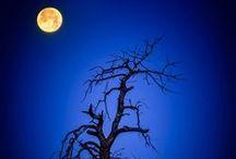 La Luna / by Tami Messmer O'Keefe