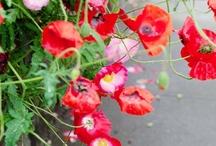 Fleurs / by Alana Snyder