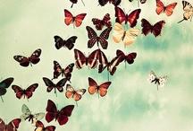 Catch a Butterfly