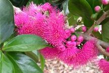Flowers of Tropical North Queensland & Australia / Colourful flowers and plants that can be found in Tropical North Queensland and Australia