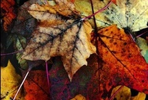Fall Time!!!!! / by Mindy Duncan