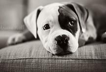 puppies! / by Brittany Heath