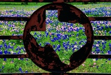 """Texas Our Texas / """"All Hail The Mighty State"""" / by Bill - Sandi Burt"""