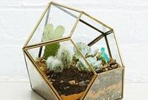 PLANTES VERTES | GREEN PLANTS