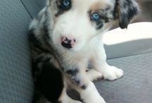 ANIMALS / puppies and cuteness that I can't stand! :)