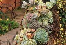 for the garden / Garden, flowers, plants, garden decor, bonsai