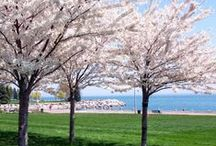 10 Awesome things to do in Burlington, ON this spring / Highlighting the best things to see and do this spring in Burlington, ON